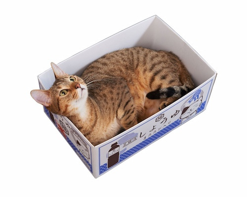 Cat Soy Sauce Bottle Box Scratching Pad