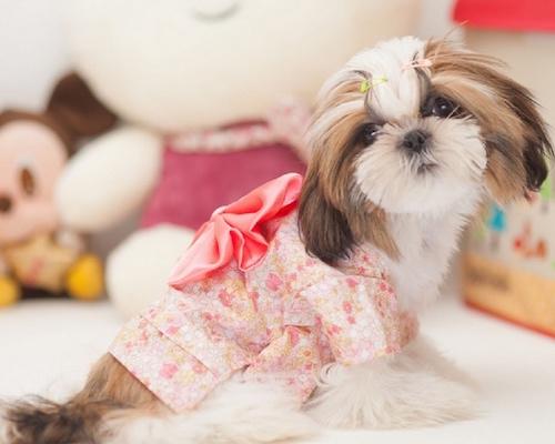 Japanese Dog Kimono
