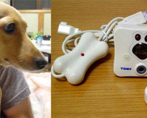 Wonderful Shot dog cat camera